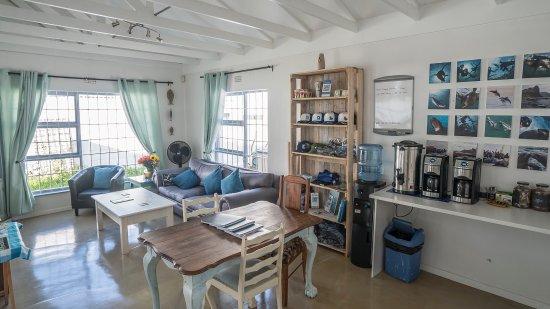 new-animal-ocean-offices